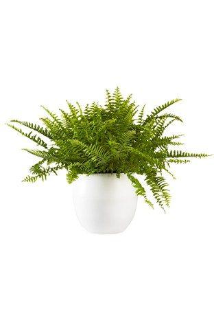 trendy planten die de lucht zuiveren en nare geurtjes wegwerken