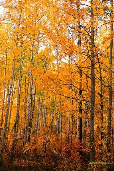 it s fall ya ll Pretty Trees