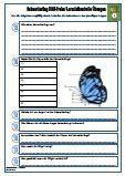#HSU #Schmetterling Unterrichtsmaterial, Arbeitsblätter, #Klassenarbeit, #Lernzielkontrolle für den #Sachkundeunterricht.  Verschiedene Fragen zu dem Thema: Schmetterling •Schmetterlingsarten •Lebensraum •Aussehen Schmetterling •Körperteile •Nahrung •Lebenserwartung •Entwicklung •Verwandlung •Paarung •Raupen •Raupenstadium •Verpuppung •69 Fragen