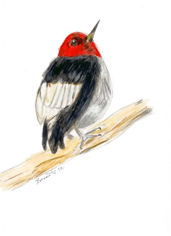 The Red-Headed Woodpecker by Zanimo on Etsy