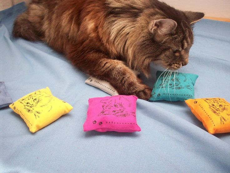 Simba med de härliga kattmyntafyllda lekkuddarna från www.katt4you.se
