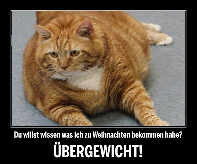 Pin von Christel Schäfer auf lustige Sachen | Cats, Funny ...