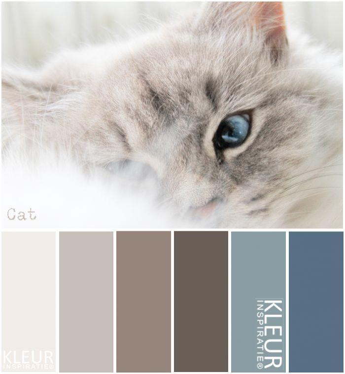 KATJE - Kleurenpalet blauw, bruin en beige.