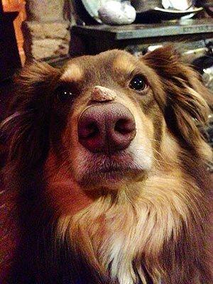 Amanda Seyfried Posts Photo of Dog Finn on Twitter