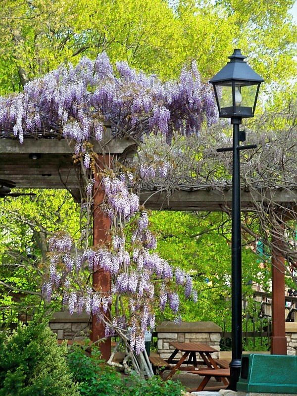 17 Best Images About Busch Gardens Williamsburg On Pinterest Gardens Sleigh Rides And Parks