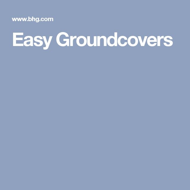 Easy Groundcovers