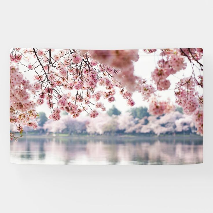 Cherry Blossoms Banner Zazzle Com Blooming Trees Blossom Pink Cherry Blossom Tree
