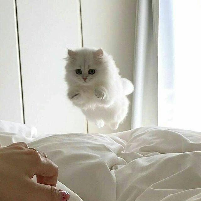 Cute Cat Pics –