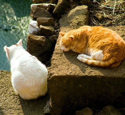 Hundreds of lucky felines haunt the ruins where Caesar was murdered.
