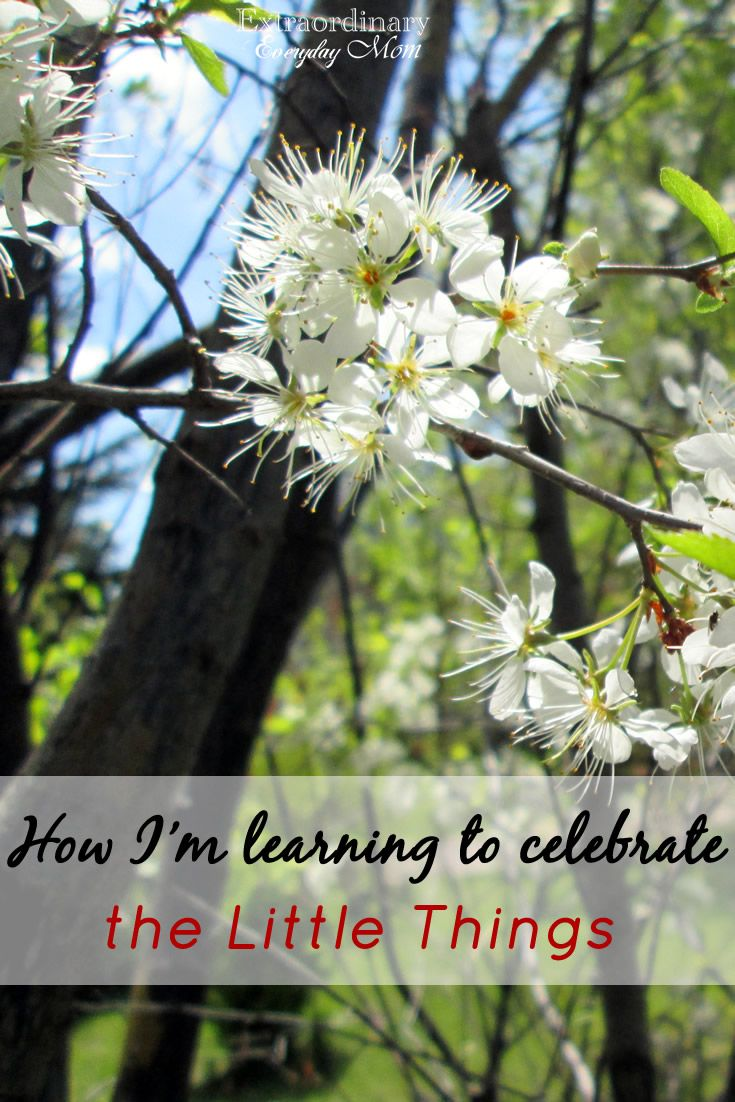 Do you ever struggle to celebrate the little things? Here are 8 ways one blogger is learning to celebrate the little things in life.