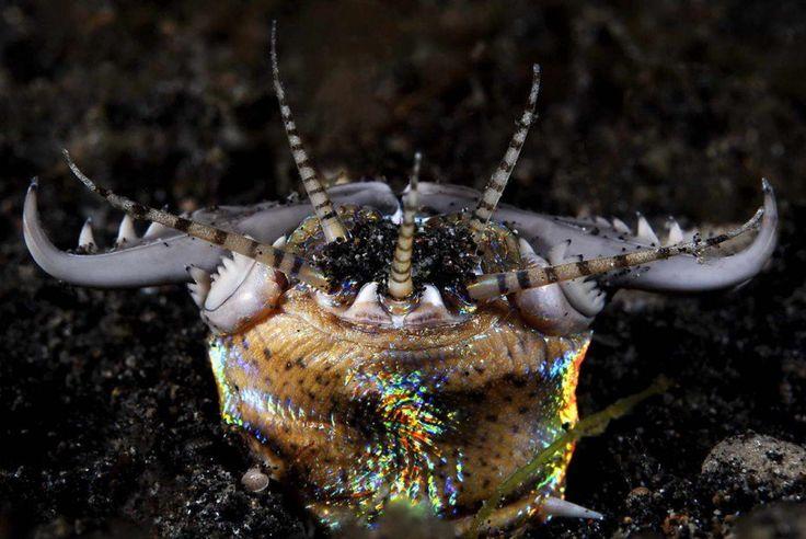 criaturas marinas- Gusano Bobbit