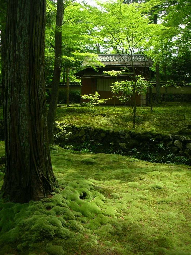 Saihoji (西芳寺) known as Kokedera (苔寺), is one of Kyoto's Unesco World Heritage Sites. Entrance to this temple requires a reservation made well in advance by mail. Kokedera means Moss Temple, referring to the temple garden's estimated 120 different varieties of moss.
