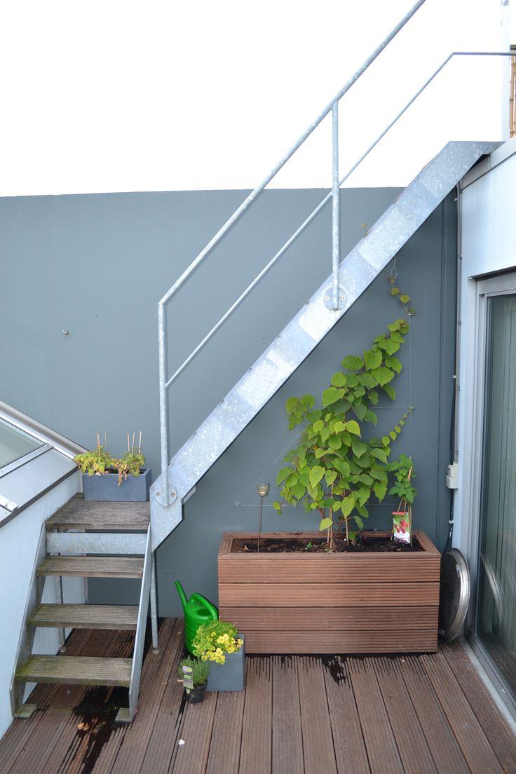 10 best dakterras meubels images on pinterest - Bamboe in bakken terras ...