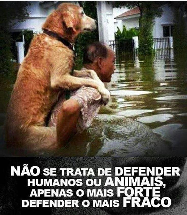 EXATAMENTE!!!❤❤ #maedecachorro #filhode4patas #caopanheiro #cachorroetudodebom #paidecachorro #cachorro #cachorroterapia #euprotejo #defesaanimal #petmeupet #petshop #sabado
