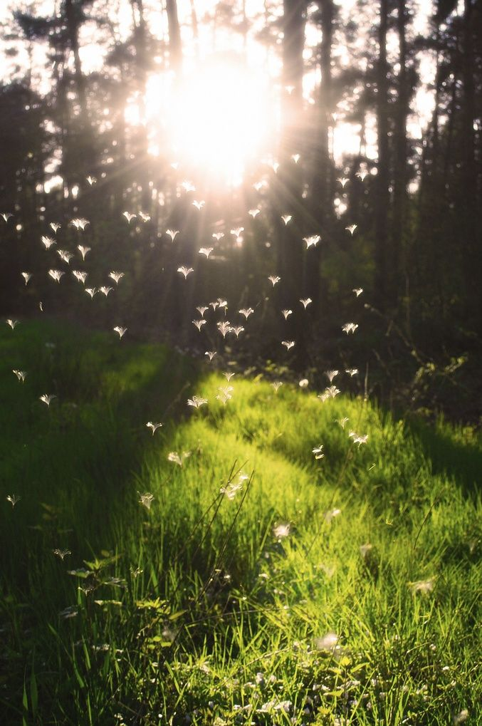 First light of spring. Krückling, Germany. Orte zur Inspiration mit www.HarmonyMinds.de #Achtsamkeit #MBSR #Yoga
