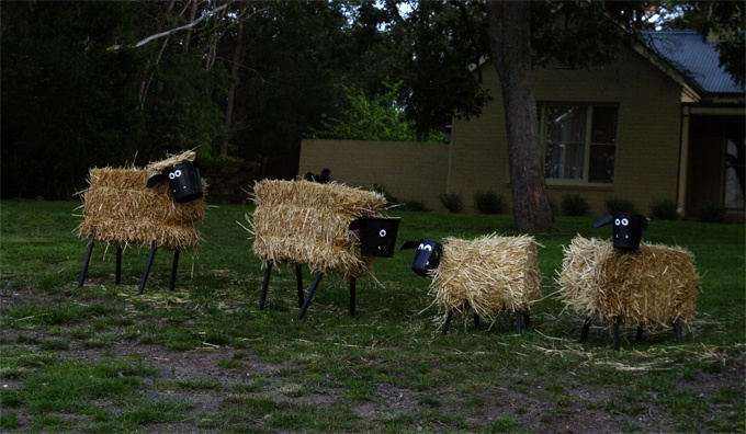 Sheep Crows Thanks To Http Www Bundanoonlions Org