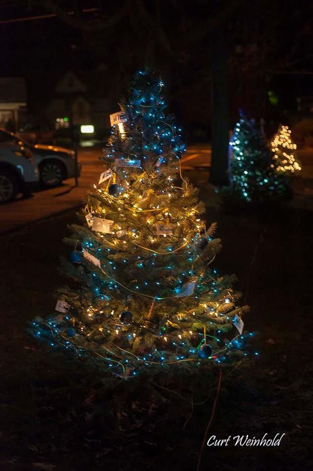 Marvelous Christmas Trees Lit In Blues And Whites Around The Download Free Architecture Designs Rallybritishbridgeorg