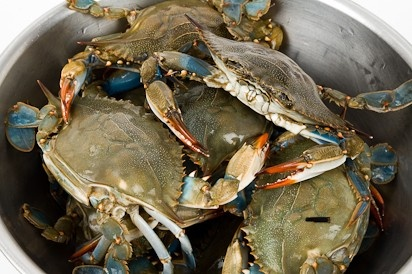 Unlimited Blue Crabs & Beer in Chelsea for $89!