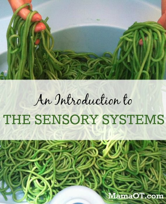 An easy-to-understand guide to the sensory systems involved in sensory integration