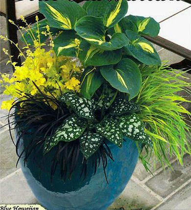 Perennial foliage for shade:  hosta, Japanese hakone grass, pulmonaria Dark Vader, black mondo grass, heuchera Lime Rickey