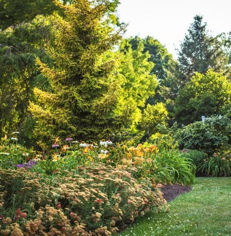 Whether you're looking for small ornamental trees or taller shade trees, here are 20 ideas for trouble-free trees that will thrive in the Midwest.