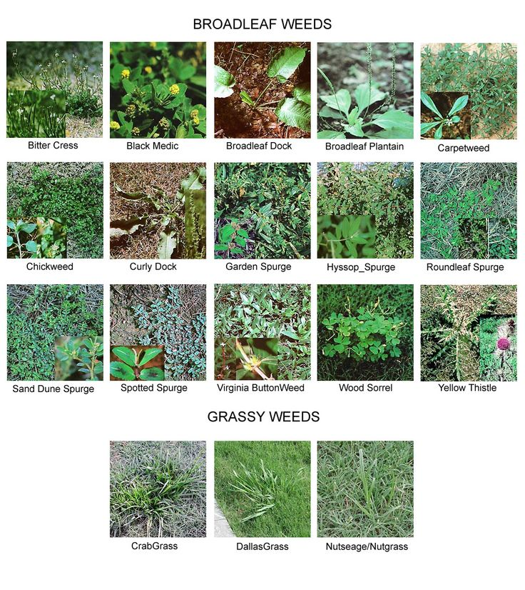Weed Identification landscaping and lawn care services