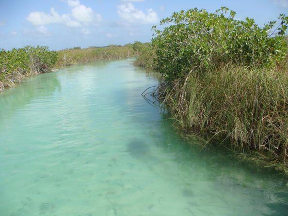"""Mexico 06 Sian Ka'anEn la lengua de los mayas que poblaban antaño la región, Sian Ka'an significa """"origen del cielo"""". Situada en la costa oriental de la península de Yucatán, esta reserva de biosfera abarca bosques tropicales, manglares, marismas y una vasta zona marina atravesada por un arrecife de barrera."""