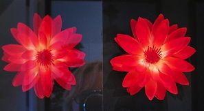 Glas-Bilderglas-entspiegelt-45-UV-Schutz-100-Lichtecht-Top-Qualitaet