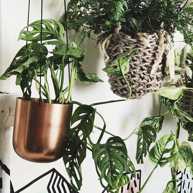 Pinterest: @candiceocheung | pant, plant holder, diy plant holder ideas, plant decor