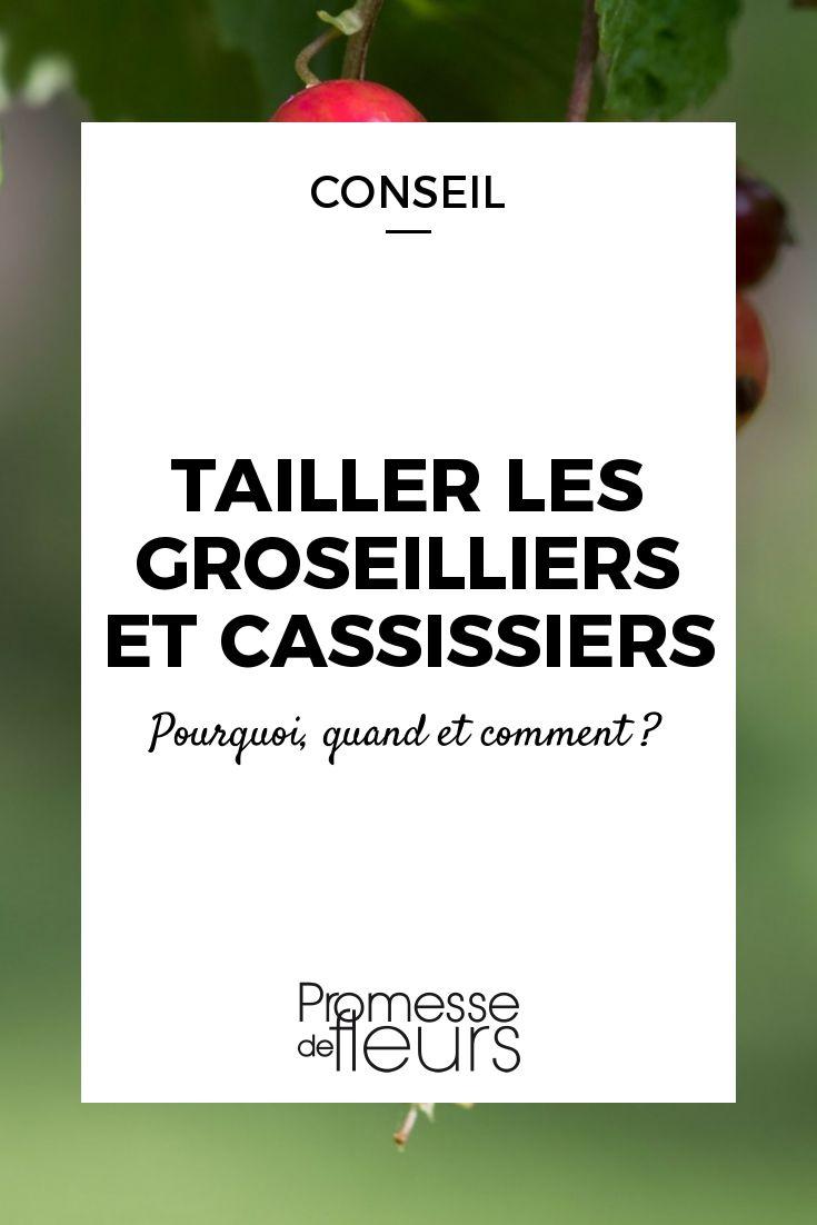 Tailler les groseilliers et cassissiers / Blog Promesse de fleurs