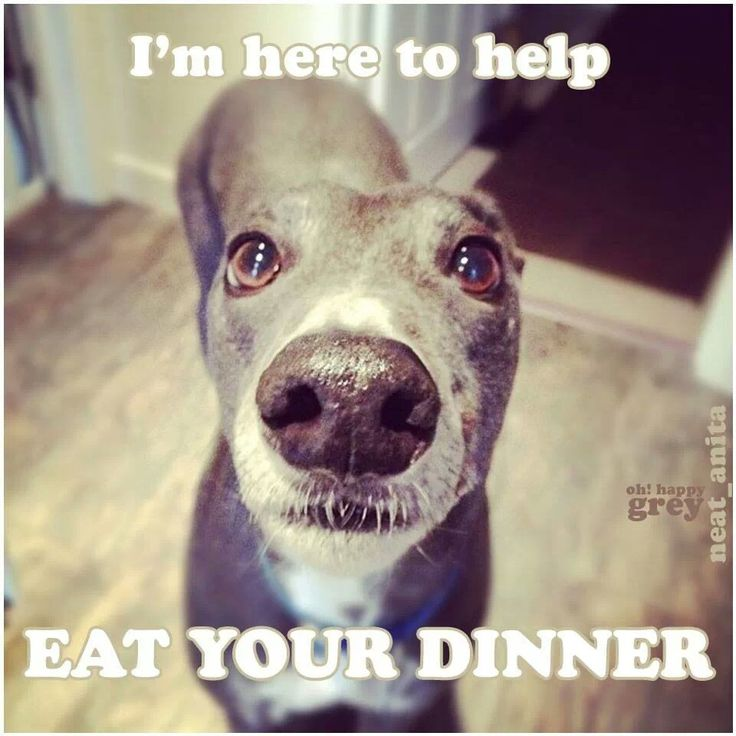 Funny Dogs - I'm here to help eat your dinner. #dogs #pets #canine