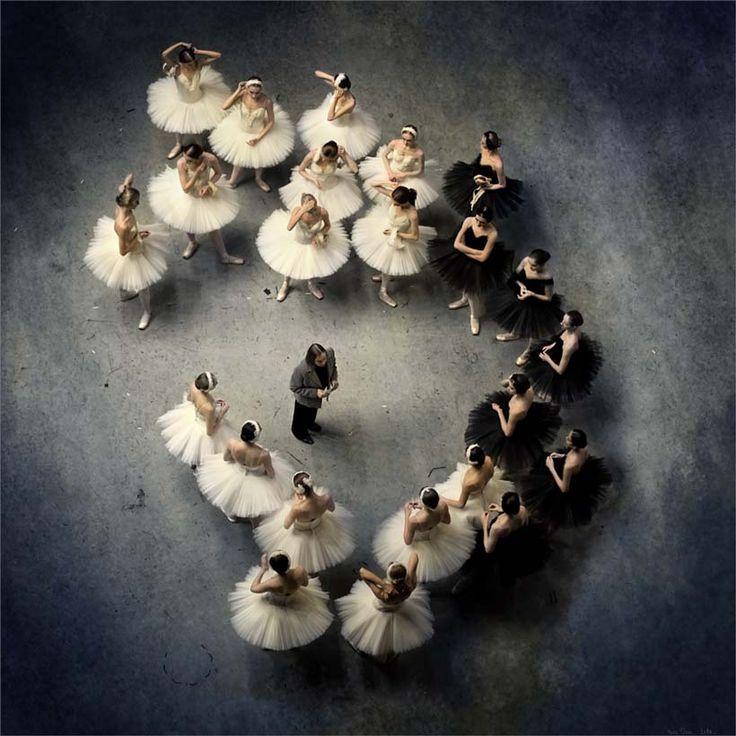 the swans...via Nikole