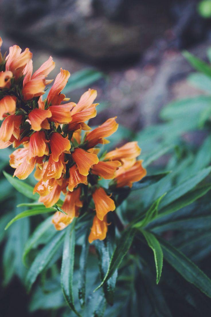 #photograph #flower