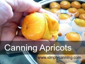 Canning Apricots both Hot pack and Raw pack instructions.  www.simplycanning.com/canning-apricots.html