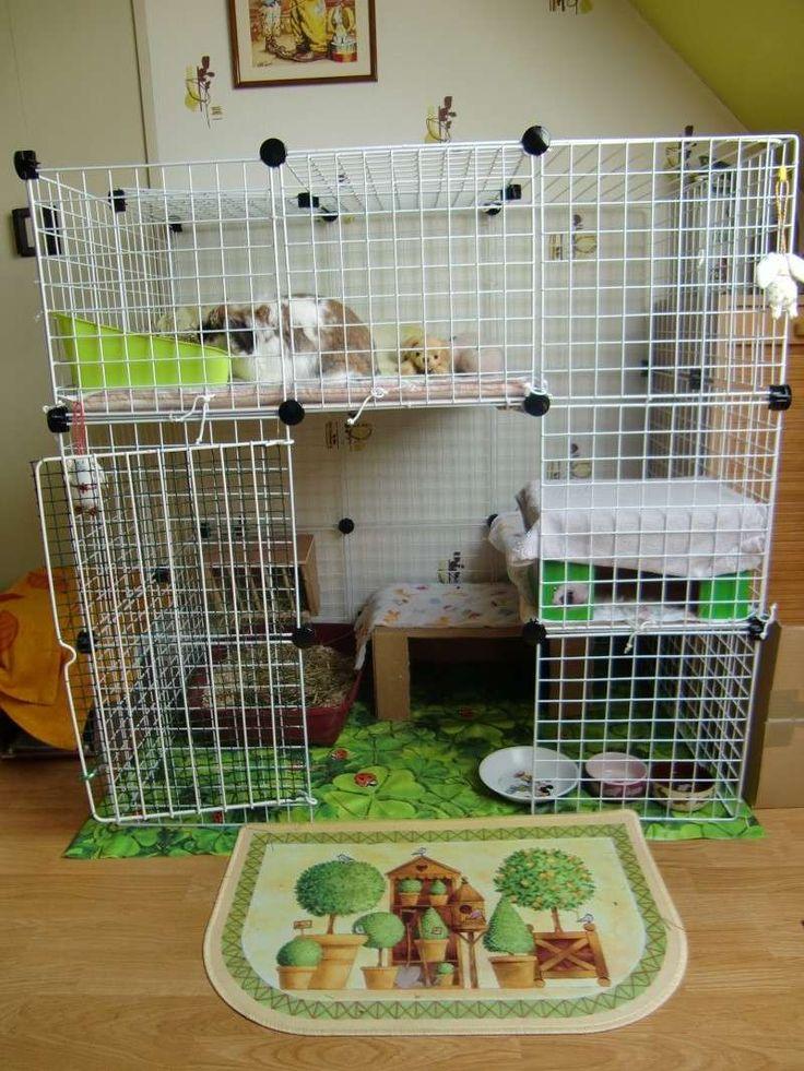 coelheiras para coelhos - Pesquisa Google
