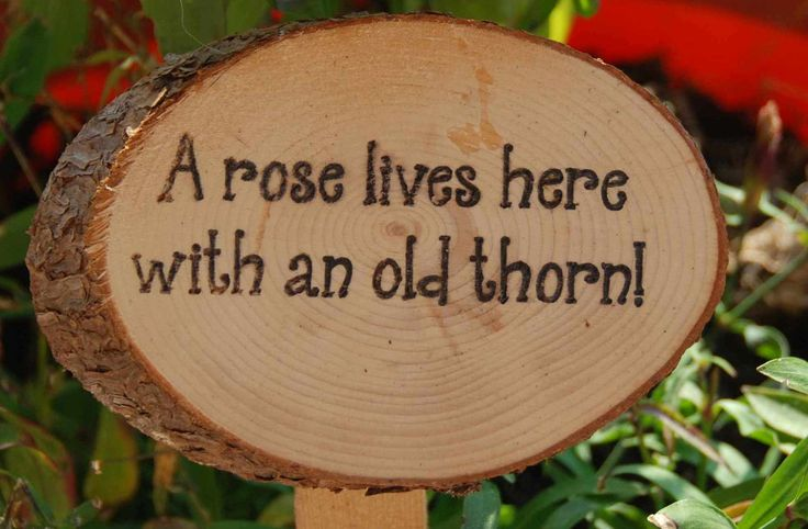Humorous Garden Signs Ideal Gift For The by AMixedBagCanada. , via Etsy.