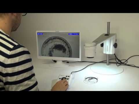 Zooming in on Seeds | TAGARNO Digital microscope