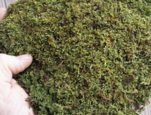 Live Feather & Sheet Moss Mix 1 Quart Bag for Terrariums, Vivariums, Fairy Gardens, Bonsai, Walkways