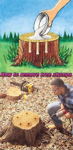 How to remove tree stumps drill holes in stump fill with 100% epsom salt then follow with water