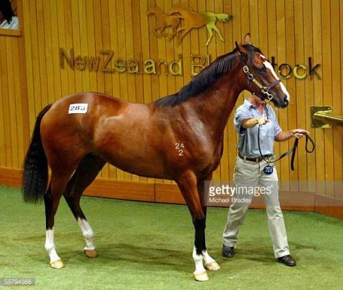 12-26 AUCKLAND, NEW ZEALAND - JANUARY 27: Lot 285 a Bay Filly,... #tristach: 12-26 AUCKLAND, NEW ZEALAND - JANUARY 27: Lot 285 a… #tristach