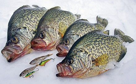 Crappie-Jigs-on-Ice-Use-What-Works-Best-In-Fisherman
