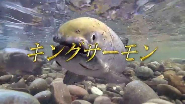 クラッシュオブキングス(キングス)TVCM「キングサーモン編」15秒