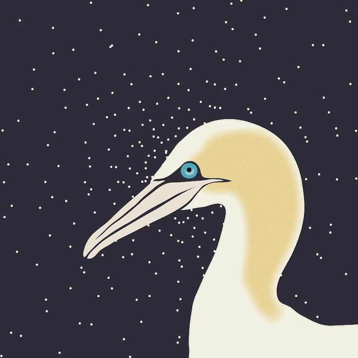 Gannet in space.