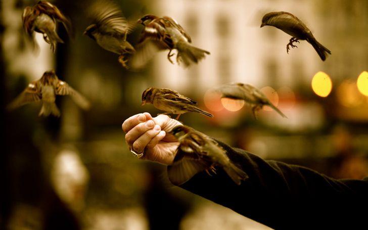 No le des pan blanco a los pájaros silvestres! Podrías ocasionar ...