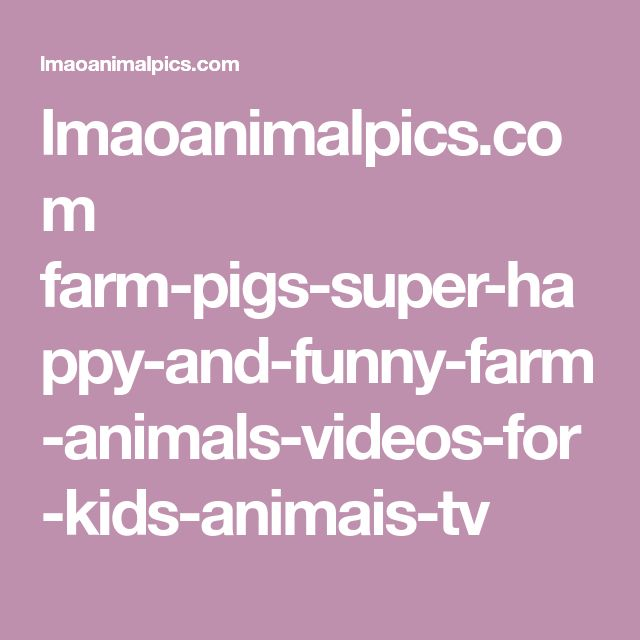 lmaoanimalpics.com farm-pigs-super-happy-and-funny-farm-animals-videos-for-kids-animais-tv