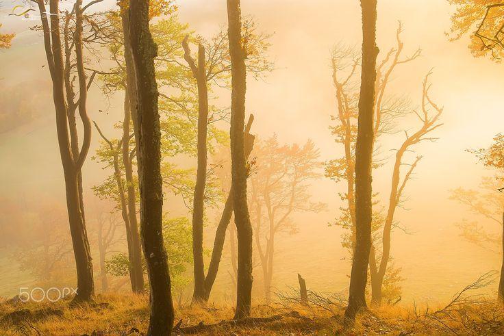 The mist - null