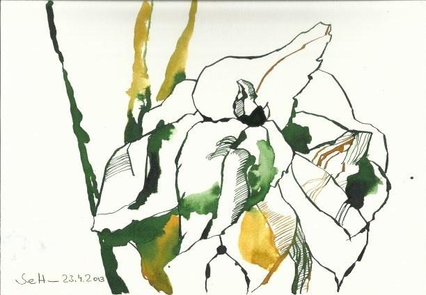 Basilikum (c) Zeichnung von Susanne Haun