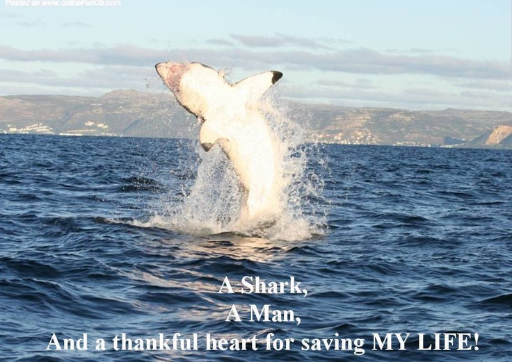 Amazing Shark-Human Love Story!