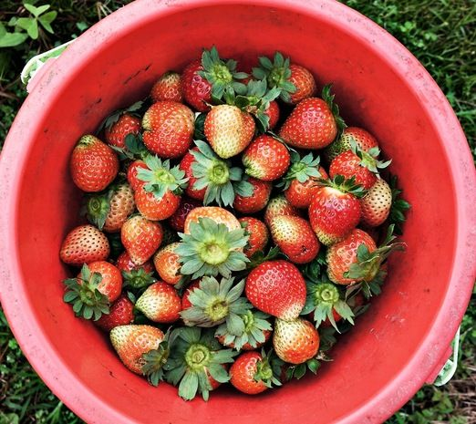 These strawberries are available at such cheap price. Photo by Raditya Margi