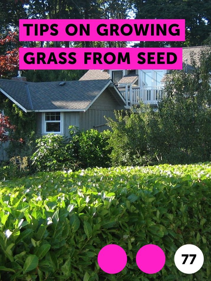 Learn Tips On Growing Grass From Seed How To Guides Tips And Tricks Centipede Grass Growing Grass Farm Pond